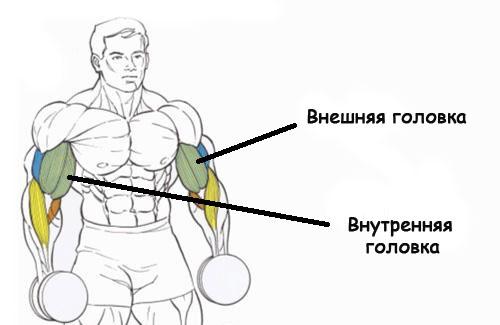 Как быстро накачать бицепс без использования стероидов