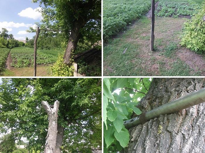 Пример самодельного турника возле одного дерева