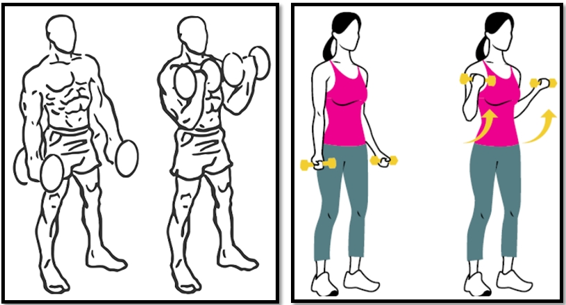 гантели бицепс упражнения картинки видео